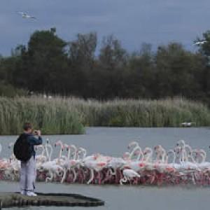 Parc Ornithologique Pont de Gau - Saintes Maries de la Mer